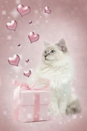 Фото Белый кот сидящий возле подарка с сердечками (© ytyz), добавлено: 25.03.2013 06:39