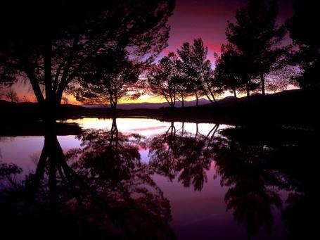 Фото Деревья и фиолетовое небо отражаются в озере (© Венджинс), добавлено: 25.03.2013 09:29