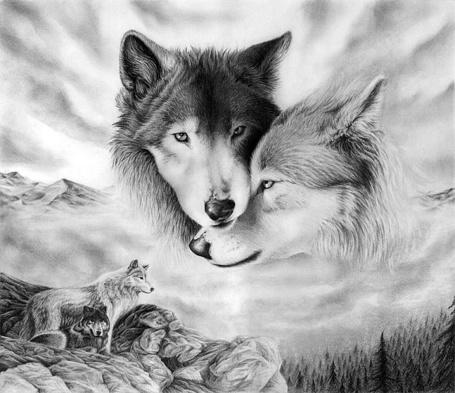 Фото Любовь волков