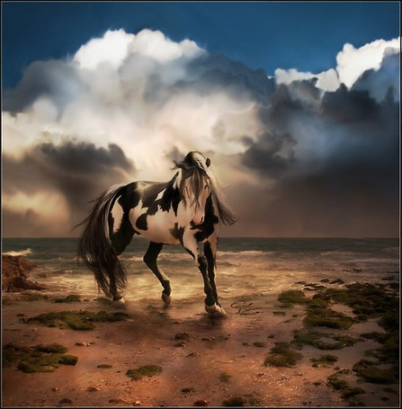 Фото Пятнистая лошадь на берегу
