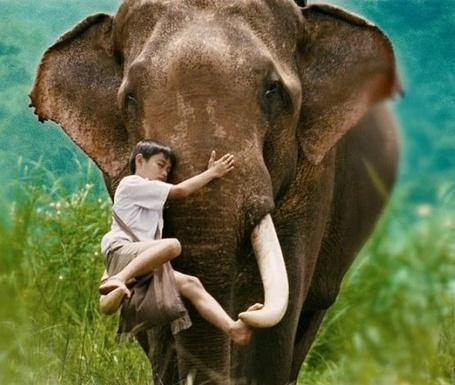 Фото Мальчик заснул на бивне слона