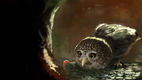 Фото Любопытная сова опустила клюв к червяку (© ), добавлено: 30.03.2013 12:36
