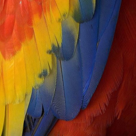 Фото Разноцветное крыло попугая