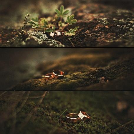 Фото Два обручальных кольца лежат на мху (© Helena_Go), добавлено: 31.03.2013 16:12