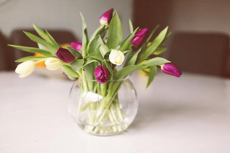 Фото Белые и розовые тюльпаны в вазе с водой