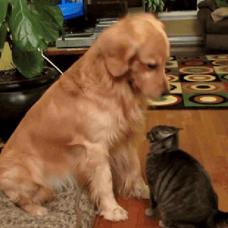 Гифки кошки и собаки, смешные картинки открытки