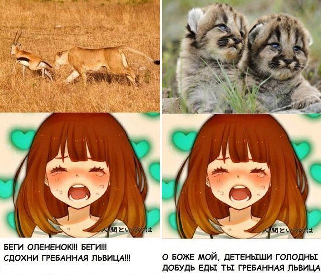 Фото Беги олененок! Беги! Сдохни гребанная львица! О Боже мой, детеныши голодны, добудь еды ты гребанная львица