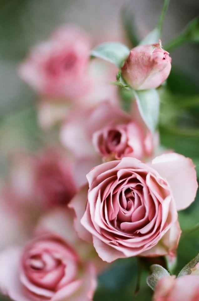 Фото цветов розовых оттенков