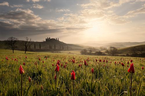 Фото Поле среди гор на котором цветут тюльпаны между травы