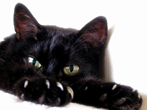 Фото черная кошка наблюдает лежа
