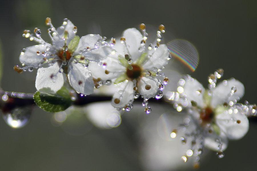 гифки красивые картинки цветение веточки что данный раздел