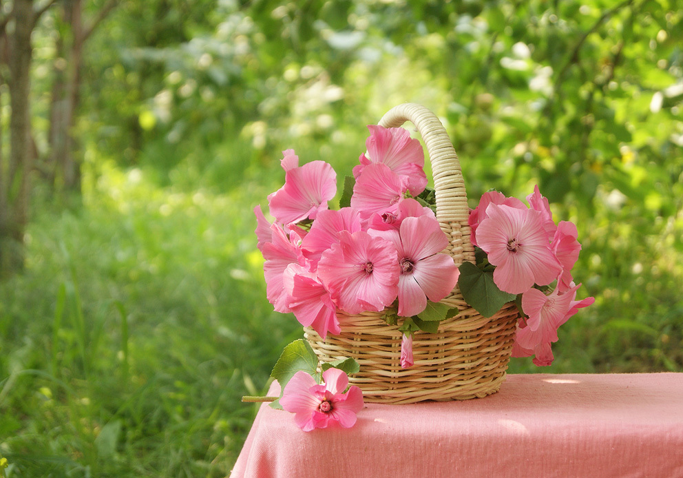 гифы цветы фото макро в корзинках этой