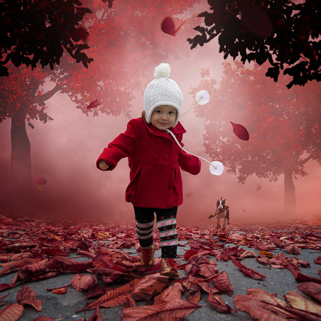 Фото Милая девочка в белой шапочке и красном пальто, бегущая по дорожке с опавшими с деревьев красными листьями, за ней бежит бультерьер, держащий в пасти палку, работа фотографа Caras Iount