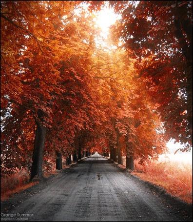 Фото Дорога, по краям которой растут липовые деревья в осенней листве (Orange Summer Wojciech Dziadosz) (© Banditka), добавлено: 27.04.2013 18:01