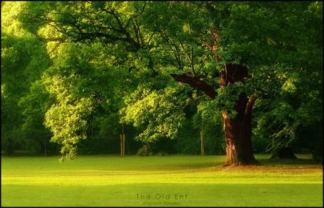 Фото Большой зеленый дуб на зеленом поле (© Banditka), добавлено: 01.04.2013 12:23