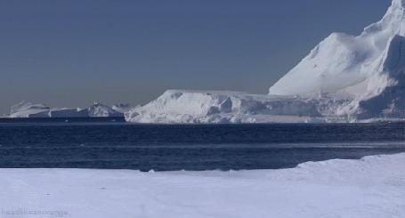 Фото Пингвин выпрыгивает из воды и скользит на животе по снегу