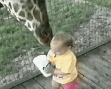 Фото Малыш кормит жирафа чем - то вкусным