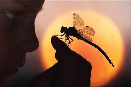 Фото Мальчик смотрит на стрекозу, сидящую у него на руке, на фоне уходящего солнца