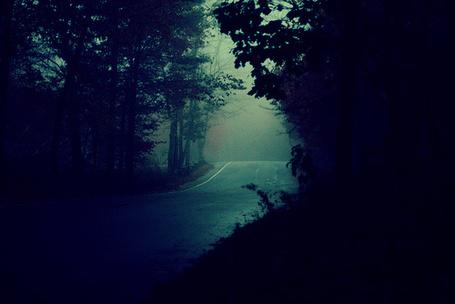Фото Дорога в ночном лесу
