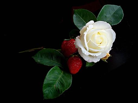 Фото Белая роза с листьями и две клубники на черном фоне