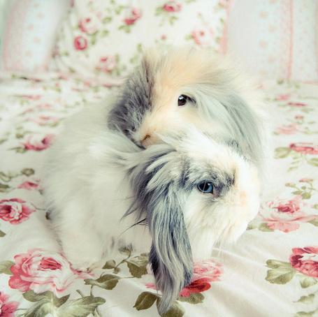 Фото Два пушистых кролика сидящие рядом