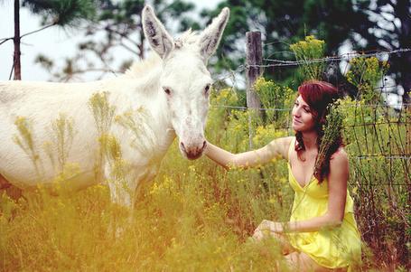 Фото Девушка в желтом платтье улыбаясь гладит ослика