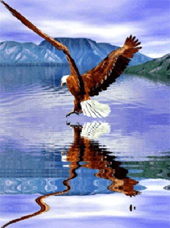 Фото Орел парящий над водой