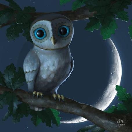 Фото Сова на ветке дерева ночью, работы Andrew McIntosh