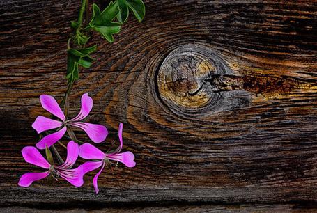Фото Сиреневые цветы с листочками на деревянных досках (© ), добавлено: 13.04.2013 00:43
