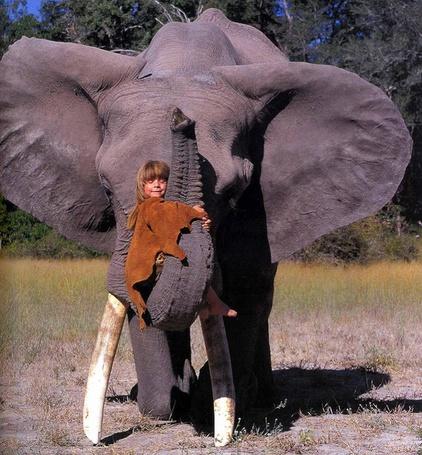Фото Девочка сидит на хоботе слона