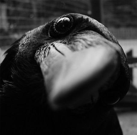 ���� ������ � ������� ������, ������� ������ (� Black Tide), ���������: 19.04.2013 01:43