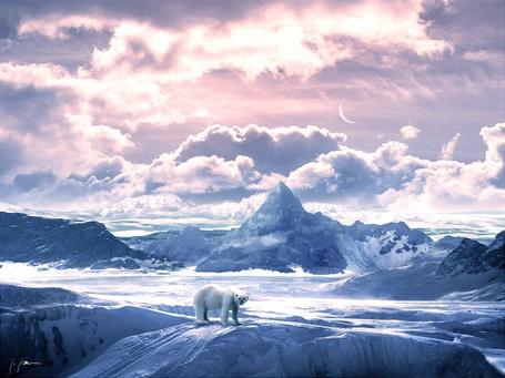 Фото Белый медведь бродит между ледяных торосов