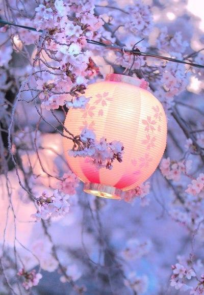 Цветы японские фонарики