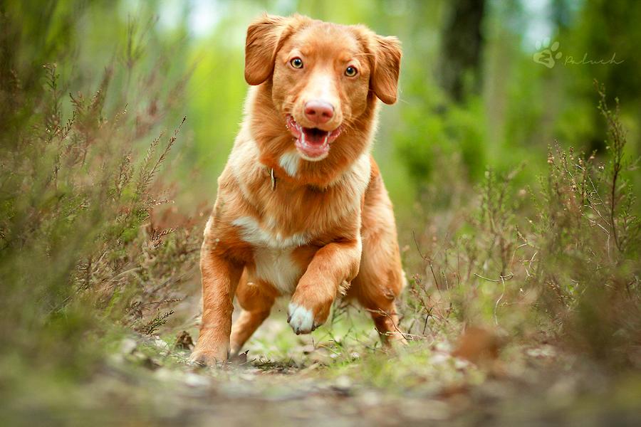 Чуть позже нашёл записку с именем этой собаки и уведомлением о том, что она больна и ей нужно лечение.
