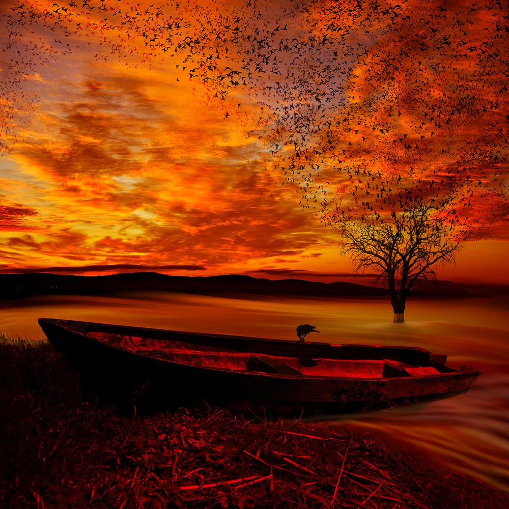 Фото Лодка, стоящая у берега озера, на борту которой сидит черная ворона на фоне одинокого дерева, стоящего в воде, багряного заката и множества кружащих в небе птиц, фотография Caras lonut