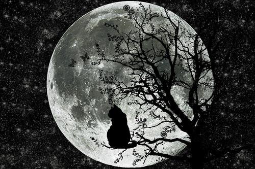 Фото Черная кошка сидит на дереве на фоне луны