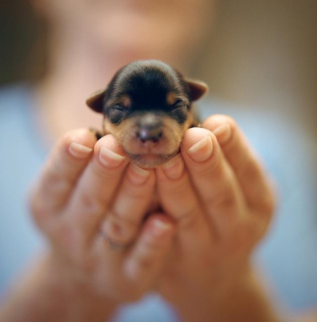 маленькие щенята фото и цена