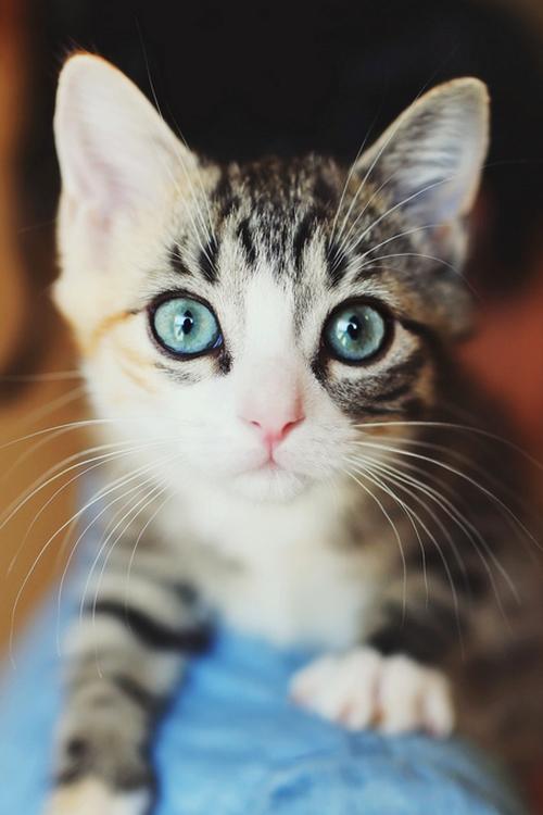 Котики на ава в вк