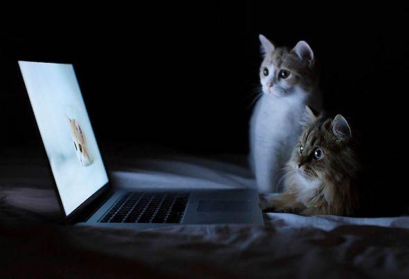 Два кота сидят в темноте и смотрят на ...: photo.99px.ru/photos/103945