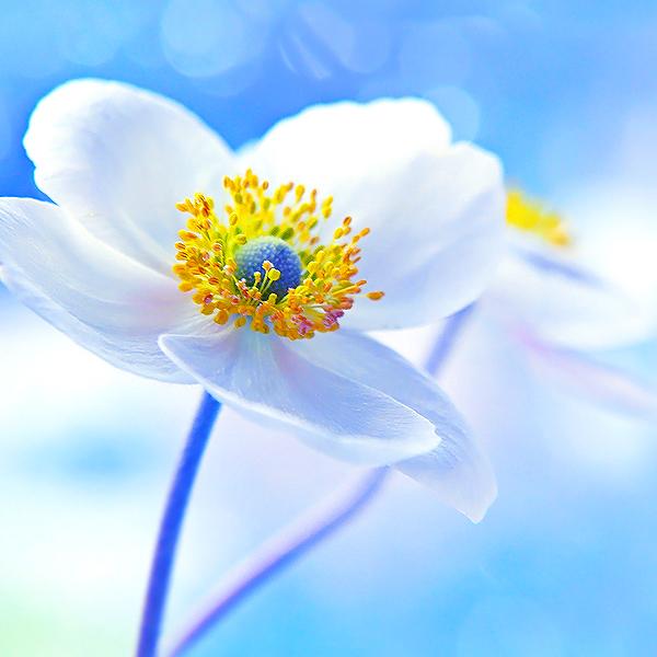 Весна цветок картинка  ladyiinfo