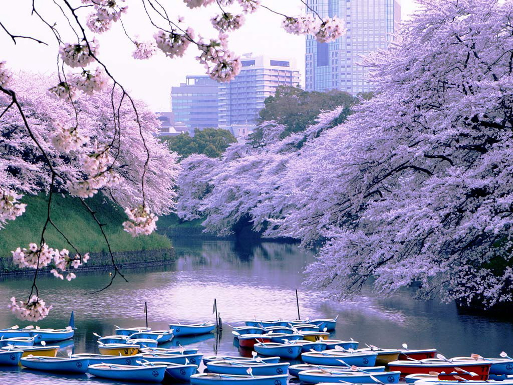 Foto Barcos de recreio em pé no canal de água, com árvores de sakura crescendo nas margens, florescendo na primavera, Parque Nacional, Tóquio, Japão / Tóquio, Japão