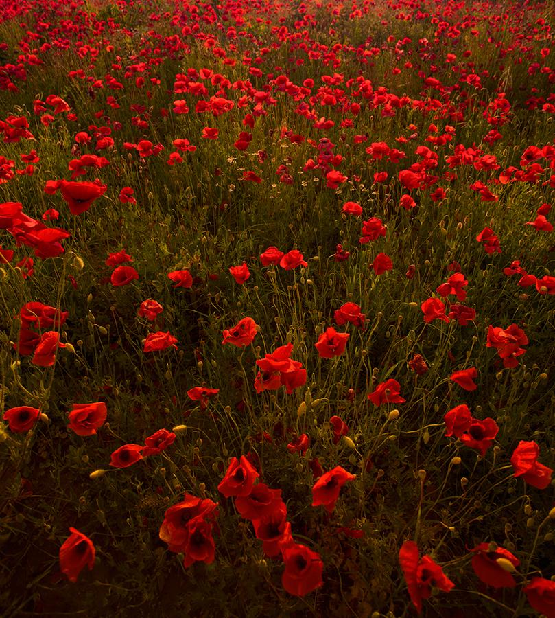 хотим предложить картинки с полем красными цветами и дорогой очень