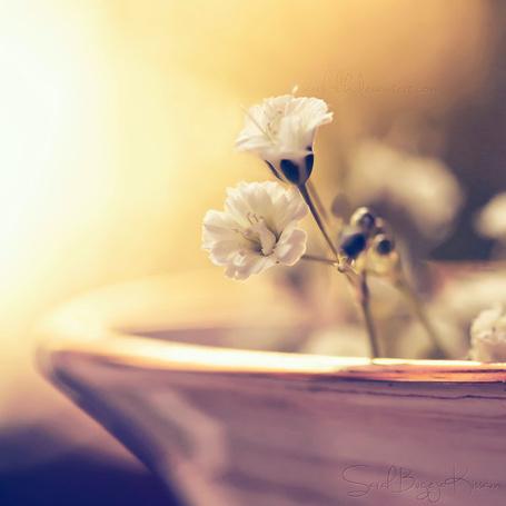 Фото Белые цветы в большой тарелке (© Banditka), добавлено: 01.05.2013 00:49