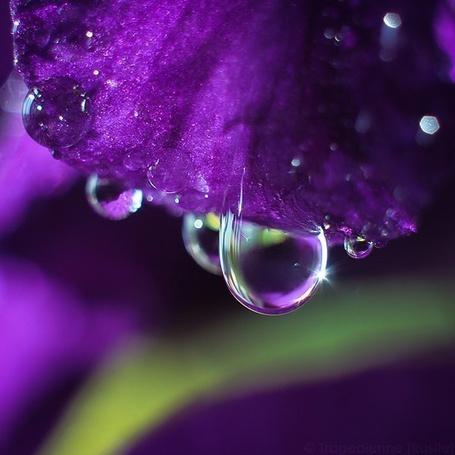 Фото цветов с капельками воды