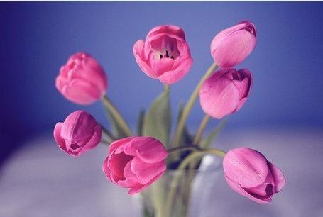 Купить семена цветов в интернетмагазине Семена почтой