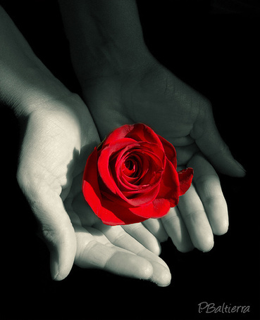 Фото Ярко красная роза в руках девушки