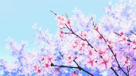 Фото Падающие лепестки с сакуры цветущей розовым цветом (© Banditka), добавлено: 12.05.2013 01:03