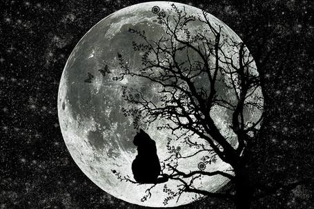 Фото Черная кошка сидит на дереве на фоне луны (© Banditka), добавлено: 13.05.2013 02:18