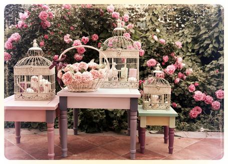 Фото Декоративные клетки стоящие на столах в окружении распустившихся кустов роз