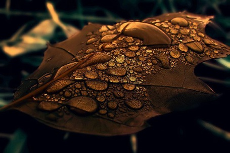 Фото Осенний листочек с каплями воды крупным планом, фотограф Emerald Wake